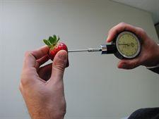 La Junta desarrolla una investigación genética para obtener nuevas variedades de fresa económicamente viables