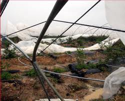 El seguro para producciones hortícolas protegidas en Andalucía cubrirá daños en infraestructuras